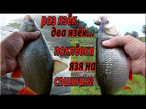 Только лучшие поклевки Язя на спиннинг! Ловля ЯЗЯ на воблеры. Рыбалка на малой реке.