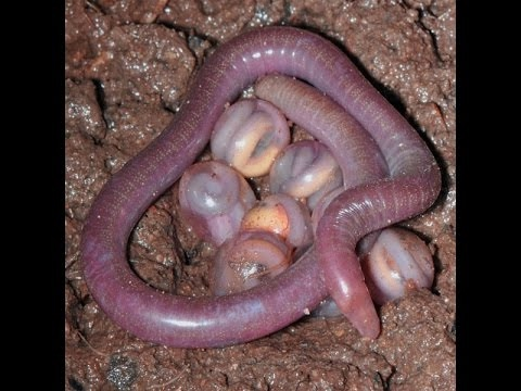 Worms - Earth Documentary (Earth Worms, Sea Worms, All Worms) Earth Documentaries