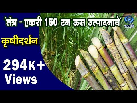 'Technology for 150 Tonnes of Sugarcane Per Acre Production' _ 'तंत्र - एकरी १५० टन ऊस उत्पादनाचे'