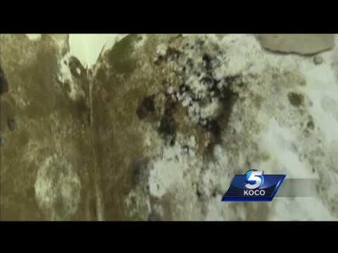 Study reveals mold infestation at Oklahoma County Jail