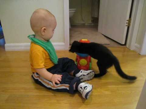 Thumbnail for Cat Video Baby & Kitten: Learning to Share