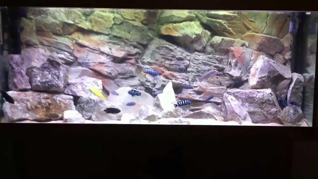 Fish Tank 3d Wallpaper Aquarium 3d Rock Background Hd Youtube