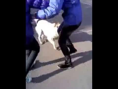 Молодой человек лаская девушку кусает её за пальцы ног видео фото 65-940