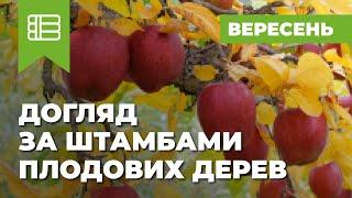 видео Как выращивать грушу в Средней полосе. Советы по агротехнике. Сайт
