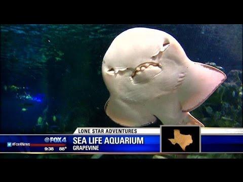 Lonestar Adventures : Sea Life Aquarium
