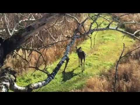 Whitetail Spike Buck reacts to Doe