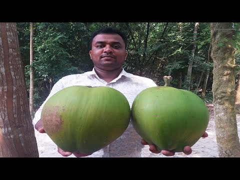Farm Fresh | Big Size Coconut Cutting and Drinking Coconut water | Village Food