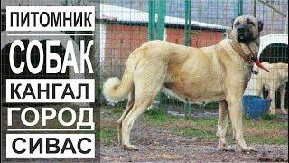 Турция: Собаки-гиганты. Наследие ЮНЕСКО. Мечеть Улу в Дивриги.