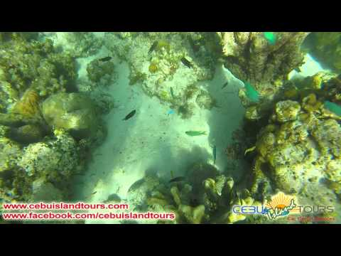 Cebu Island Tours: Mactan island hopping and snorkeling