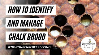 How to Identify and Manage Chalk Brood