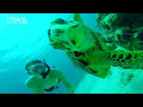 Exploring Marine Life at Grace Bay | TPG