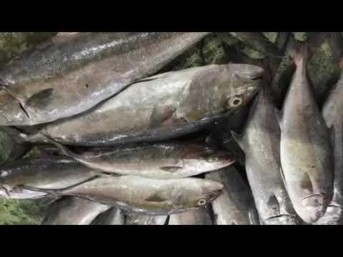 Karachi Fish market bussiness