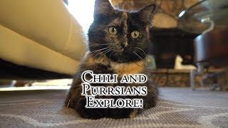 Chili and Purrsians Explore! thumbnail