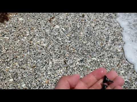 Shark tooth hunting South Venice Beach honey hole