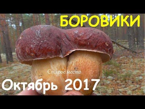 Боровики и белые.Грибы октябрь 2017.Mushroom.Mycology