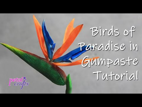 Making a Gumpaste Birds of Paradise Flower by Petal Crafts