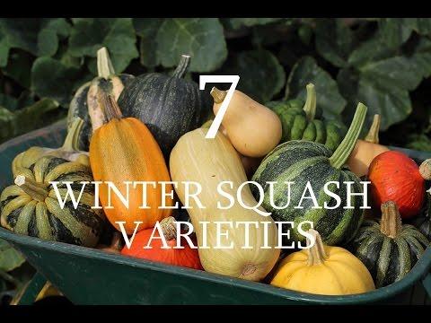 7 Varieties of Winter Squash