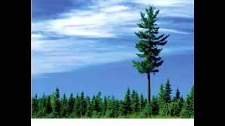Erykah Badu - 20ft Tall (Osunlade Yoruba Remix)