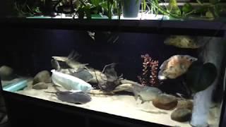 Советы по содержанию аквариума. Часть 1