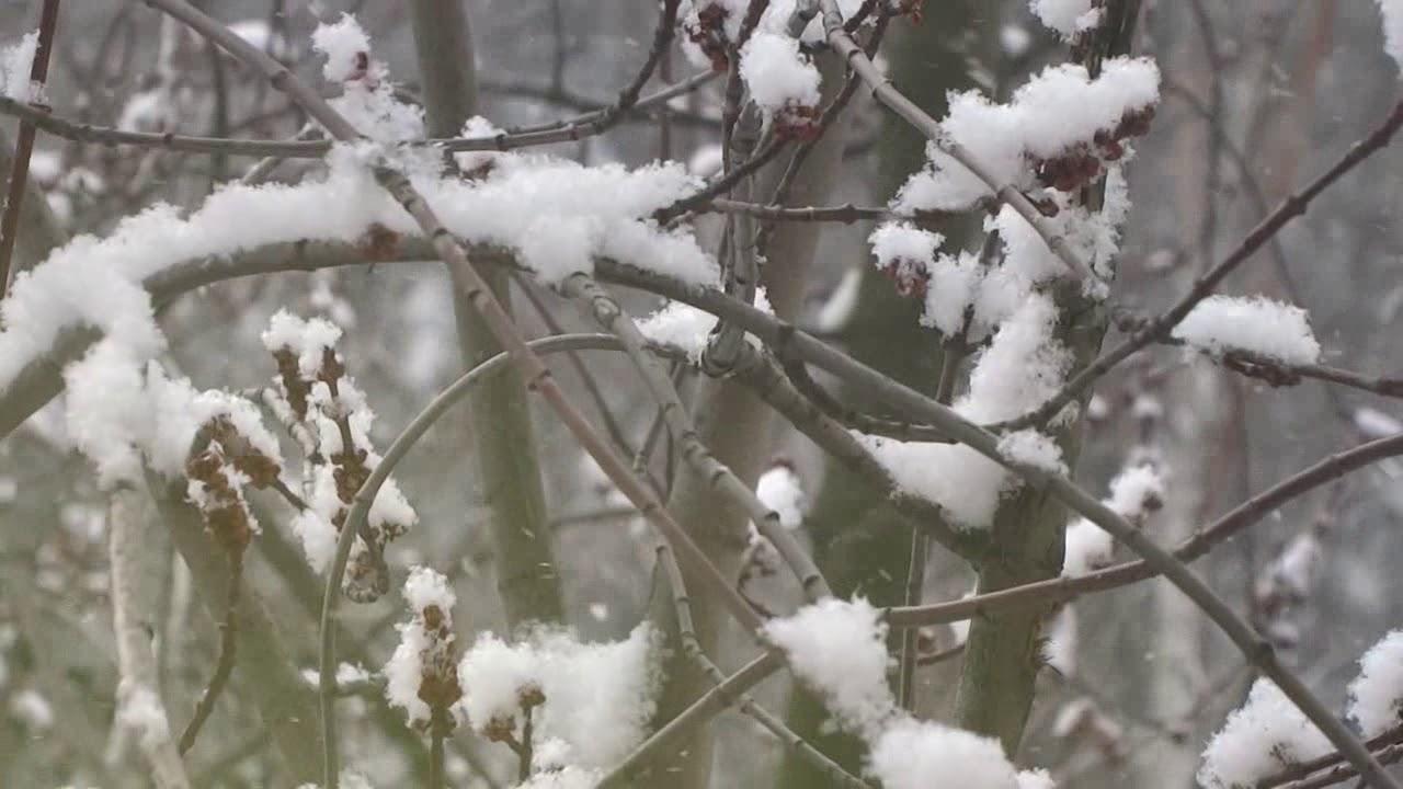 Стих про зиму и Новый год для детей - YouTube
