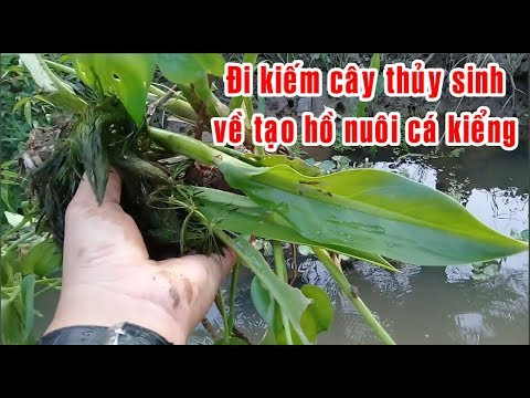 Tạo hồ thủy sinh nuôi cá kiểng - kiểu nhà quê chỉ tốn 10 k |  create aquarium | KHUYÊN PHƯƠNG TV
