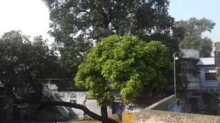patna sahib gurudwara