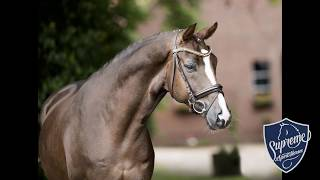 2012 gelding by Belissimo M