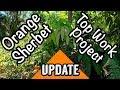 'Orange Sherbet' Top Work Project Update