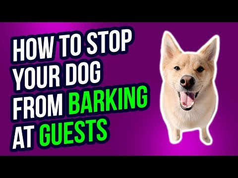 how-to-stop-your-dog-from-barking-at-guests