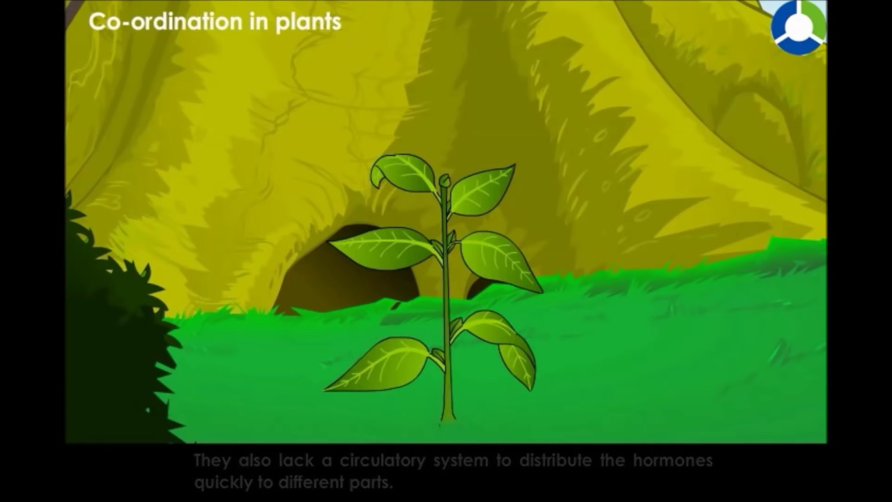 an analysis of thermoregulation in plants This video lecture from homeostasis (fsc second year biology) covers: thermoregulatory, adaptations in plants to low and high temperature.