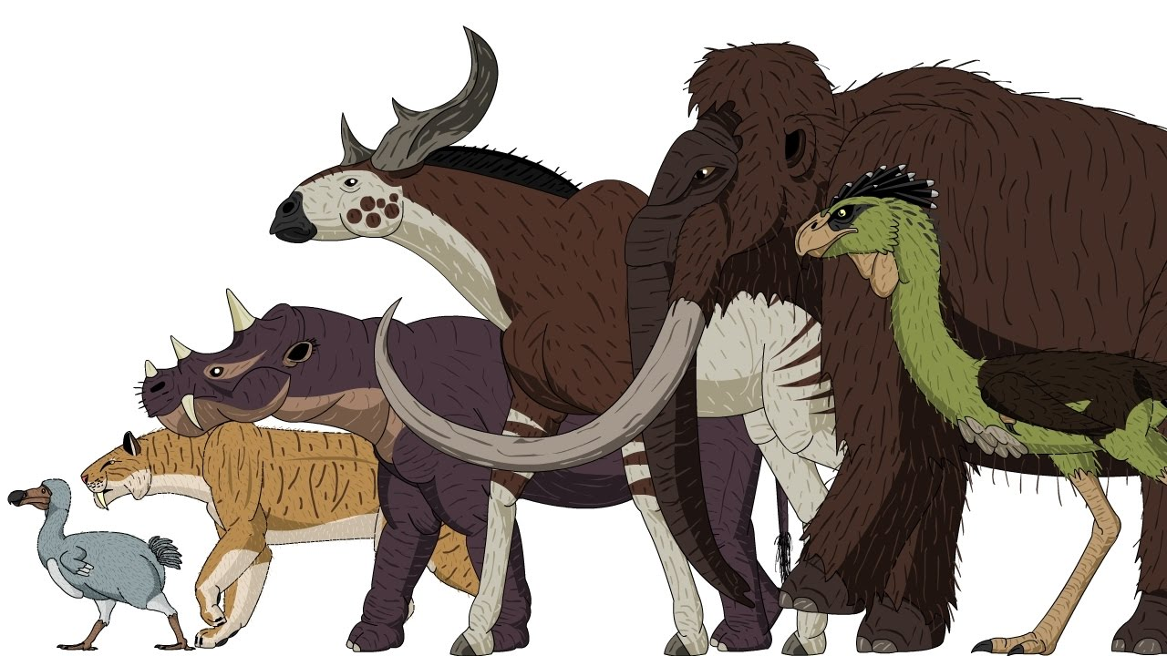 Cenozoic beasts animated size comparison also youtube rh