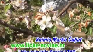 Spašene jabuke snimio Marko Čuljat Lika press Gospić