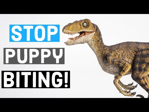 How To Train Your Great Dane Puppy to Stop Biting: Don't Make These Mistakes! | Great Dane Care