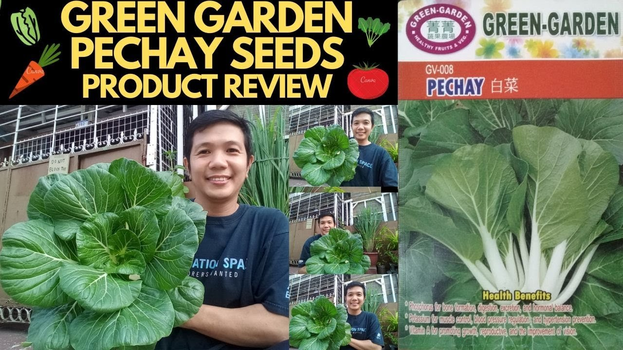 HOW TO PLANT PECHAY (BOK CHOY) - GREEN GARDEN PECHAY SEEDS PRODUCT REVIEW