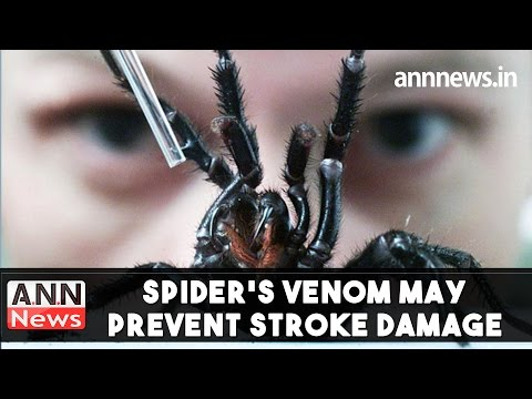 Spider's venom may prevent stroke damage #ANNNews