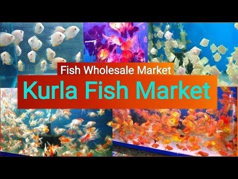 Wholesale Aquarium Fish Market In Mumbai, Kurla Fish Market
