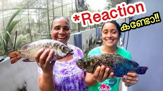 ഞാൻ പിടിച്ച മീനിനെ കണ്ട് ഞെട്ടിയ മമ്മിയും ചേച്ചിയും | Surprising My Parents with Huge Fishes