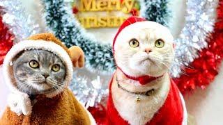 猫たちのクリスマス動画です。 猫サンタと猫トナカイのかわいいコスプレ...
