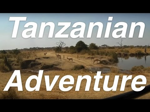Tanzanian Adventure: Unfiltered | The Serengeti, Ngorongoro Crater & Tarangire National Parks