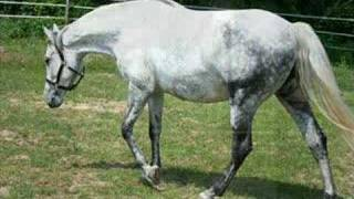 Zinita - Awesome Sporthorse Mare!