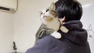お父さんに抱っこしてアピールをする猫