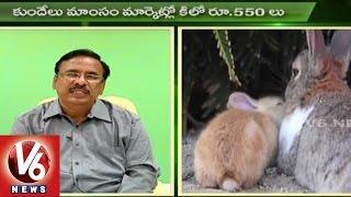 Sagubadi | Rabbit Farming Techniques | Rabbit Meat | Agriculture News l V6 News