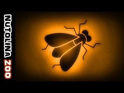 Fly sound / Fly noise / Animal sounds fly