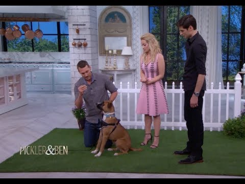 here's-how-to-teach-your-dog-a-new-trick-in-just-a-few-minutes---pickler-&-ben