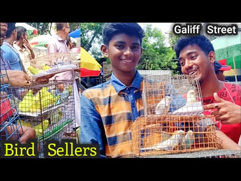 Kolkata Bird Market At Galiff Street Visit & Price Update 30th JuneThe Largest Pet Market In Asia