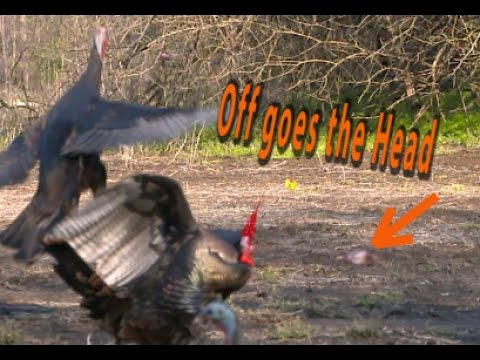 OFF WITH THE HEADS   Turkey Decapitations 4K Archery