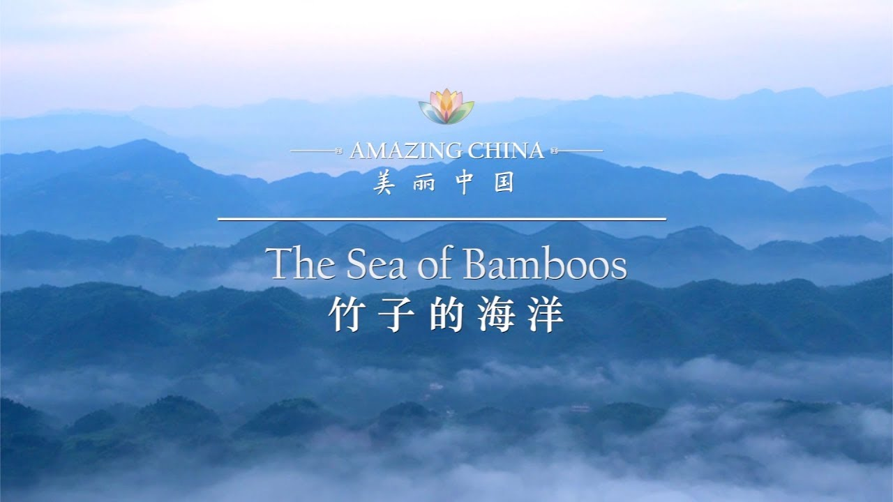 【Amazing China】 The Sea of Bamboos | iPanda