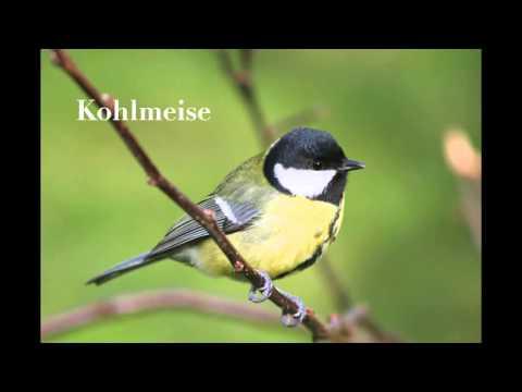 Tierschutz: Die Top 10 der deutschen Gartenvögel