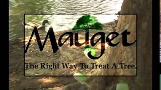 How to Use Mauget Capsules, English