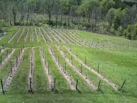 Cayuga Wine Trail:wine & herb